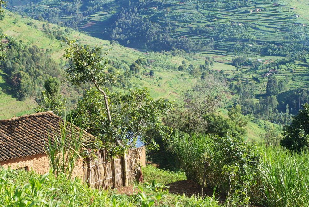 Intombi - Landschaft Ruanda