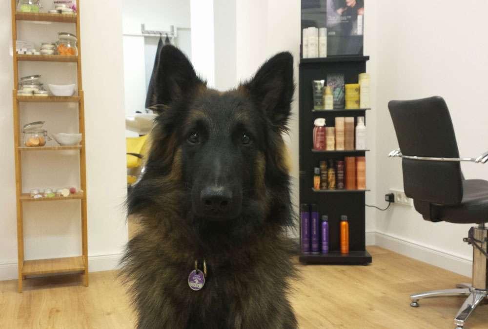 Das Regenbogenschaf - Hund Egen im Salon Färberin Maike Schnichels – Das Regenbogenschaf im Interview