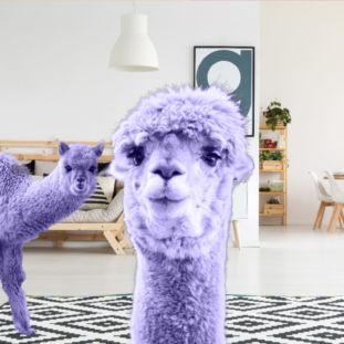 Alpaka in ultraviolett: Trends 2018 Alpaka [object object] Welcher Strick-Typ bist du?