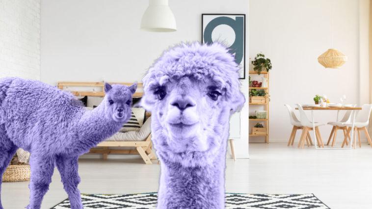 Alpaka in ultraviolett: Trends 2018 trends 2018 Ultraviolette Alpakas: Das sind die Trends 2018!