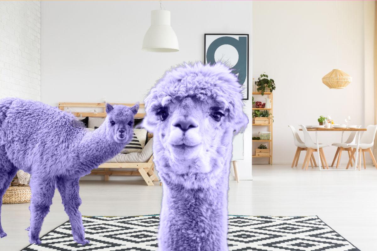 Ultraviolette Alpakas: Das sind die Trends 2018!