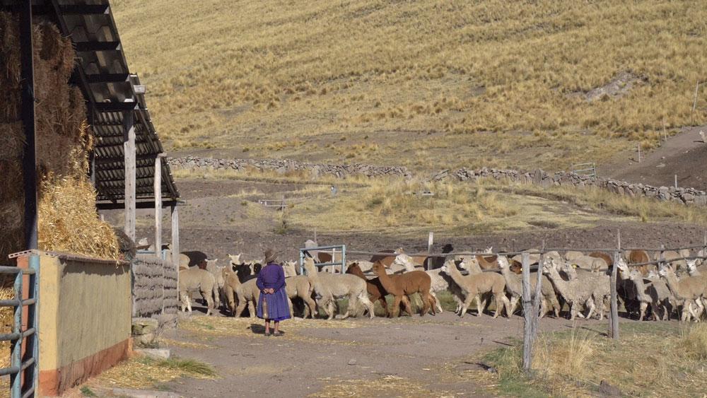 Pascuali filati naturali - Farm im Hochgebirge von Peru