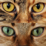 Profilbild von Birgit